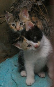 Baby-kittens-together