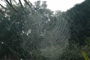 Spider-web-compressed